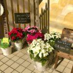 12月の月いち花屋さん