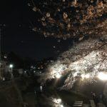 桜は日本の心だと思った平成のある日