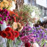 おすすめのお花がいっぱい♪